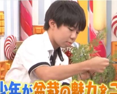 盆栽少年の東山拓仁(ひがしやまたくと)は何者?盆栽大会?師匠や作品、家族を調査!【マツコの知らない世界】
