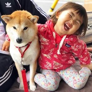 もぐ(柴犬)&すーちゃんがかわいすぎるとインスタで話題!姉妹のほっこりストーリーまとめ【行列のできる法律相談所】